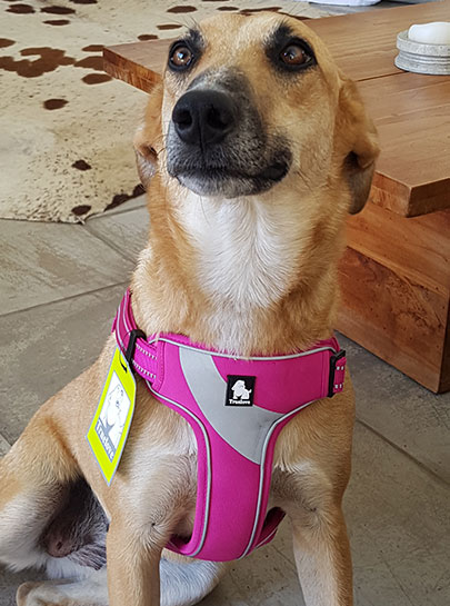 Truelove Front Range Comfortable Soft Mesh Dog Harness