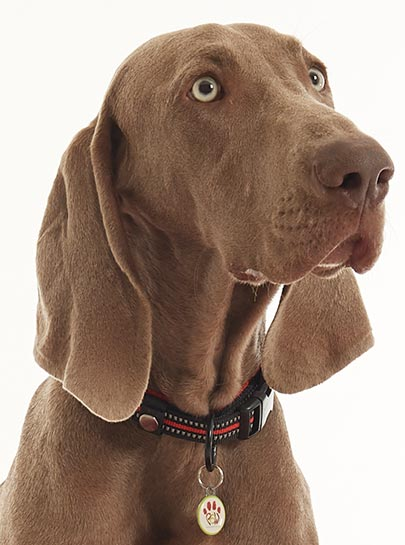 Truelove Mesh Padded Nylon Dog Collar