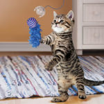 KONG-fishing-pole-cat-teaser-toy