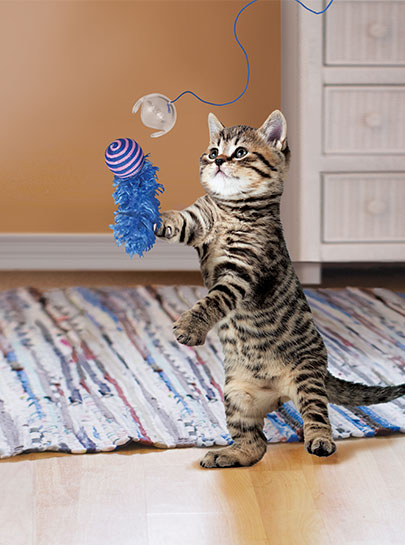 KONG Fishing Pole Cat Teaser Toy