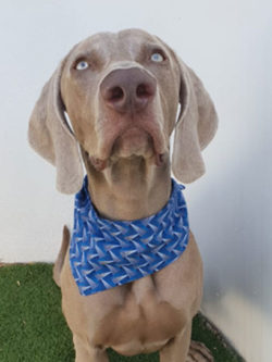Geometric Blue Tie Scarf Dog Bandana