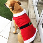 rosewood-christmas-coat_Gracie