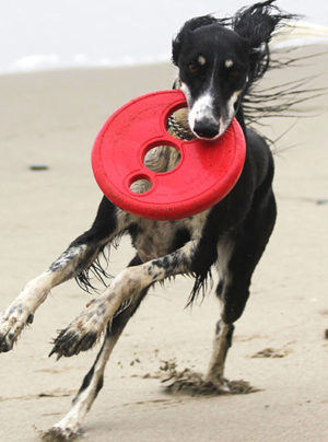 Rogz Flying Object Frisbee