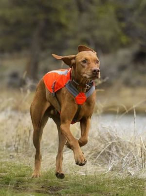 Track Safety Jacket Dog vest by Ruffwear