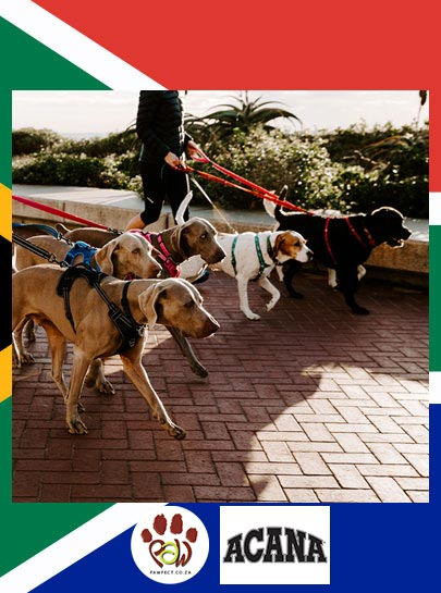 Heritage Day Virtual Dog Fun Run/Walk