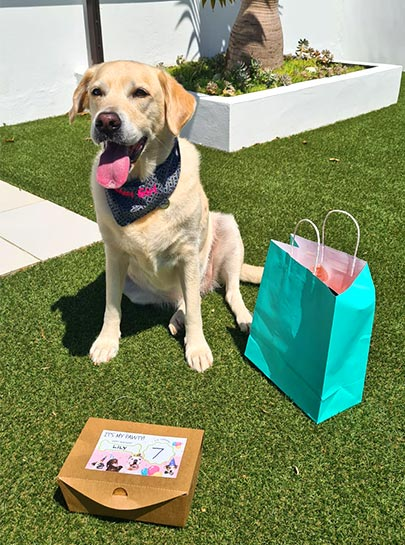 Host a Pawty with Pawty Boxes