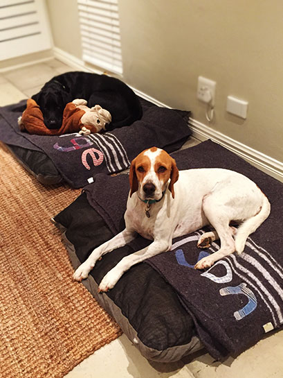 summerhill dog blankets