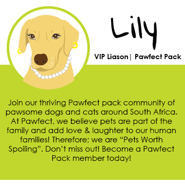 PawfectPack_Intro_Mobile