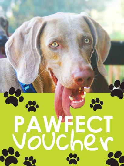 Pawfect_voucher_product