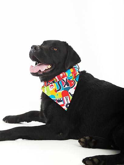 Love SA feed through collar Bandana