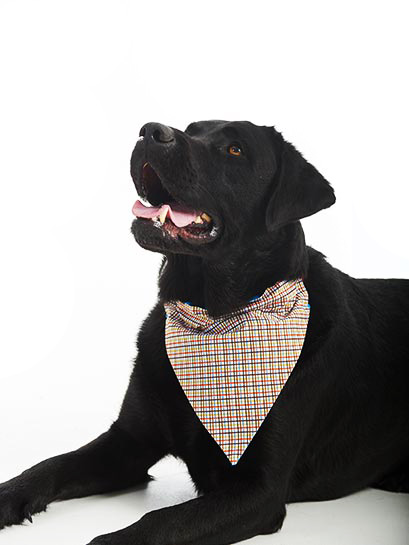 Tweed feed through collar bandana