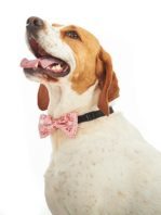 pawfect-bowties-redpaisley