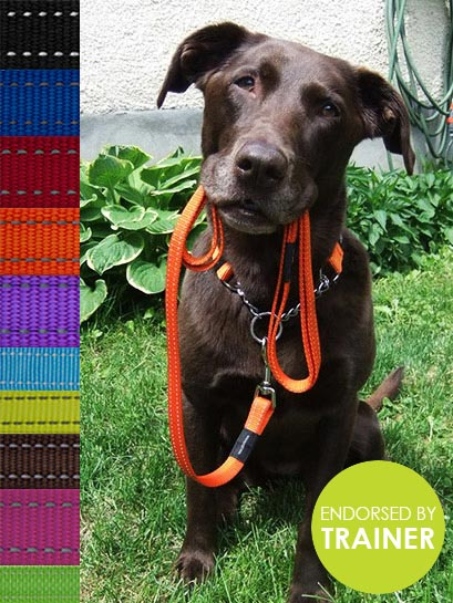 Lumberjack Obedience Collar - Rogz